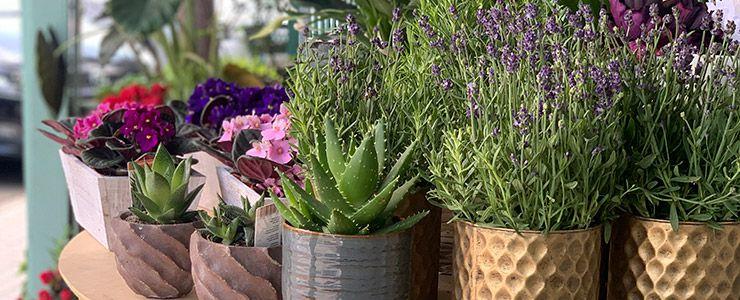 plantas a domicilio en madrid las rozas